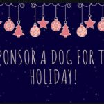 Sponsor a Dog for Christmas!