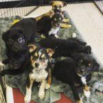 UMDR Pandemic Puppy Grams